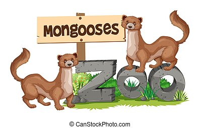 Mongooses standing on zoo sign illustration