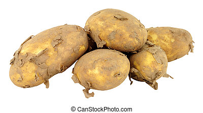 Dirty Unwashed New Potatoes - Group of dirty unwashed new...