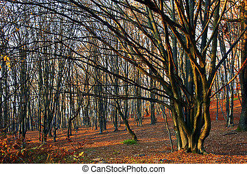 Autumn in forest - Somewhere in the forests of Jgheabu, near...