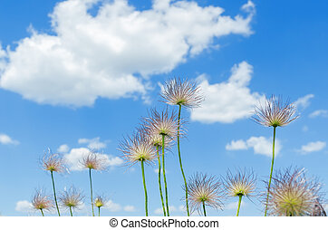 fluffy flowers on the sky background