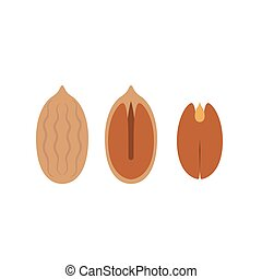 pecan icon, flat design vector