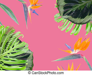 orange hibiscus flower - tropical flowers and leaves - frame...