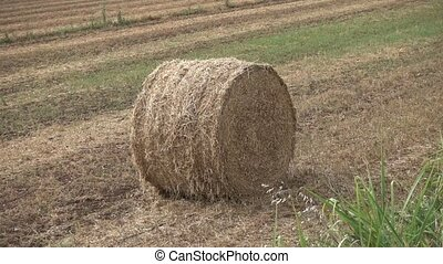 bale of hay in the meadow