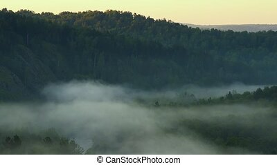 Singing birds at dawn. Mountain landscape and pine forest. -...