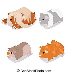 Guinea Pig Breeds Set with Peruvian, American Teddy, Skinny...