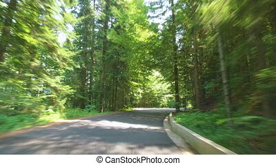 Traveling by car through the green forest in summer day