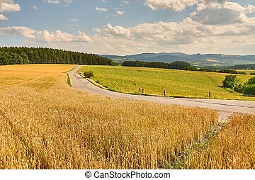 Road through farmlands - Narrow road through agricultural...