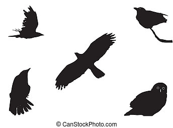 big birds - birds, silhouettes set