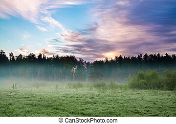 summer rural landscape with forest, a meadow and fog at...