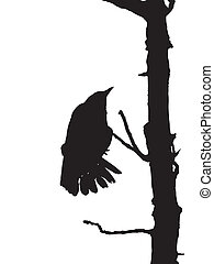 Raven - silhouette, raven on dead tree