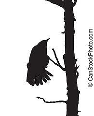 Raven - silhouette, raven on dead tree