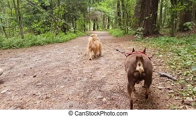 Two small dogs walking in the park