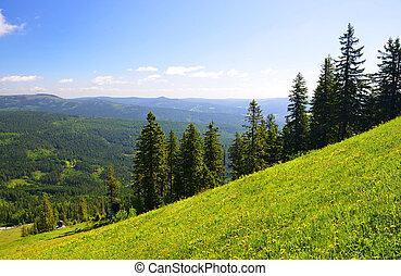 Summer landscape in Bayerische Wald,Germany. - Summer...