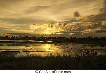 Sunset Ricefield - Silhouette of ricefield and trees at...