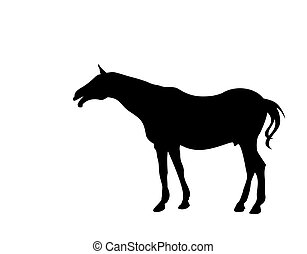 Black silhouette of a horse. White background. - young horse...
