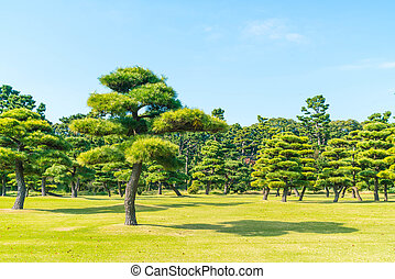 Bonsai tree in the garden of imperial palace at Tokyo City,...