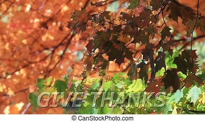 Give Thanks - Fall Leaves HD Loop - Text Give Thanks at...