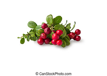 Wild Cowberry with leaves - Wild Cowberry foxberry,...