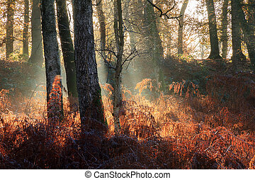 Sunrise fog in the forest - Beautiful mysterious morning...