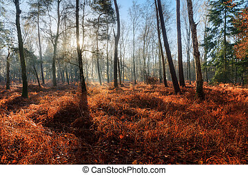 Forest ferns in fall - Beautiful mysterious morning sunrise...