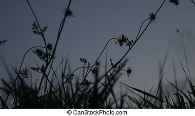 Backlit Child Silhouette Amid Wild Plants - Backlit child...