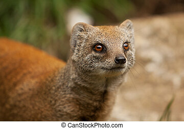 mongoose  - alert mongoose