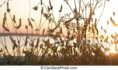 Lake Shore Wild Plants Backlit Silhouette - Lake shore wild...