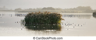 Migratory birds resting on Agamon Lake. Israel