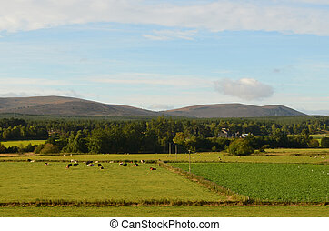 Beautiful View of the Cairngorm Mountains with Fields - Lush...