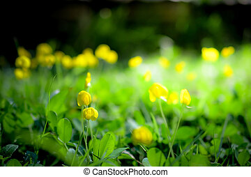 yellow flowers with sunlight background