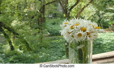 Bouquet of camomiles in a glass vase on the window. The petals of the daisy flowers move from the summer wind. Overall plan on blurred background, soft focus. The play of light and shadow