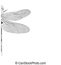 Elegant, partial dragonfly insect detailed sketch in black...