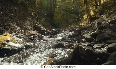 Forest River Flow - Beautiful forest water flow with river...