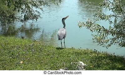 heron alone  in the park