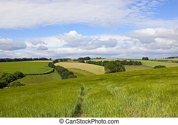 wolds barley - undulating arable farmland in the yorkshire...
