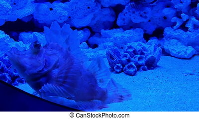 Underwater world in oceanarium - Underwater world in...