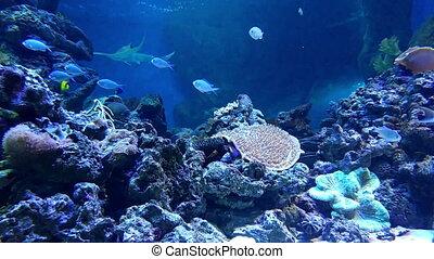 Underwater world in oceanarium - Underwater world in...
