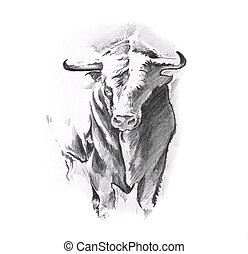 Sketch of tattoo art, bull
