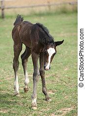 Nice foal on pasturage - Nice foal standing on pasturage in...