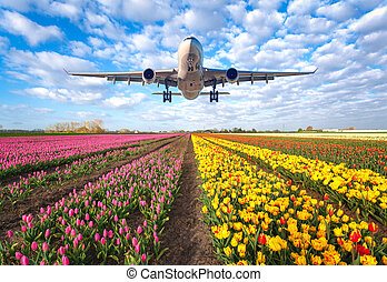 Commercial plane and tulips - Airplane. Landscape with...