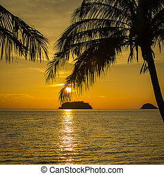 Palm trees silhouette at sunset Thailand - Coconut palm...