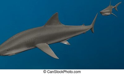 many white shark swimming underwater, 3d animation