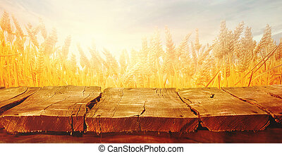Wheat field in summer with planks - Wheat field with wood...