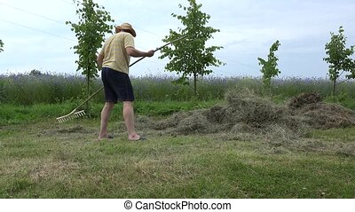 gardener man in shorts and hat rake hay dry grass in summer....