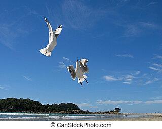 Sea bird ballet. - gulls in flight on beach