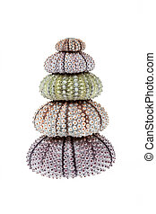 Stack of sea urchins
