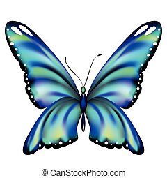 beautiful blue butterfly, isolated  on a white