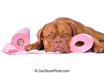 Puppy with two rolls of toilet paper - Cute puppy with two...