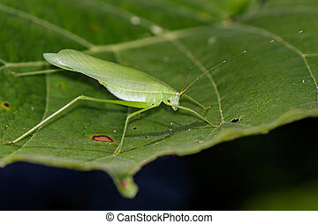 Image of a grasshoppers on green leaves. Insect Animal (Dark...