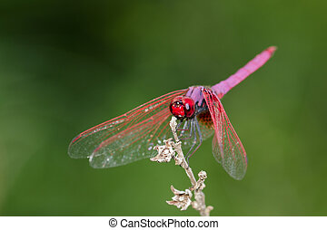 Image of a dragonfly on nature background. Insect